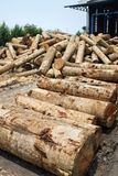 Pile of timber wood log in a plywood mill factory Stock Image