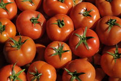 Pile of Tomatoes Royalty Free Stock Photos