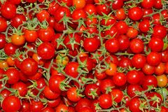 Pile of Tomatoes Stock Image