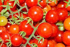 Pile of Tomatoes Royalty Free Stock Photography