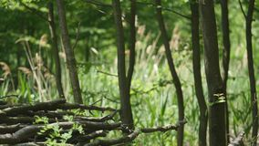 Pile of tree branch, wood stick stock footage