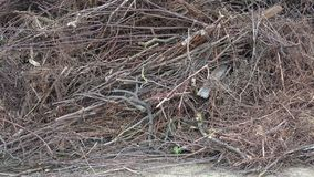 Pile of tree branch, wood stick and gabage. Dry tree branches - waste of timber industry stock footage