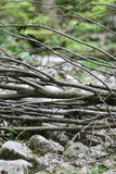 Pile of tree branches. Closeup of a pile of tree branches lying on rocks in the Velebit mountains, Croatia Stock Photography