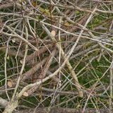 Pile of tree branches Stock Images