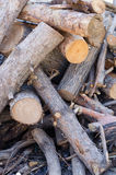 Pile of tree branches composition Royalty Free Stock Photos