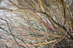 Pile of tree branches composition as a background texture royalty free stock photography