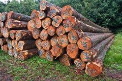 Pile of tree stems Royalty Free Stock Photos