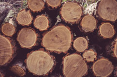 Pile of tree stumps. Pile of wooden tree stumps Royalty Free Stock Images