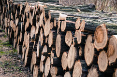 Pile of tree stumps. Pile of wooden tree stumps Royalty Free Stock Photo