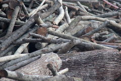 Pile of tree trunks Stock Photography
