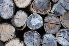 Pile of Tree trunks Stock Images