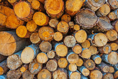 Pile of tree trunks close up view Stock Images