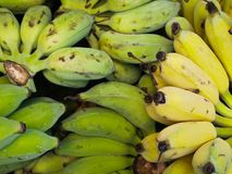Pile of Tropical Thailand Bananas Stock Photography