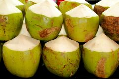 Fresh young coconuts royalty free stock images