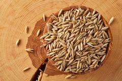 Pile of unpeeled oat grains on wooden background, top view, close-up, macro, selective focus. Some copy space. Dietary food. Vegan background. Healthy eating Stock Image
