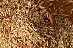 Pile of unpeeled oat grains on wooden background, top view, close-up, macro, shallow depth of field. Pile of unpeeled oat grains on wooden background, top view Stock Photos