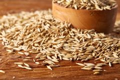 Pile of unpeeled oat grains on wooden background, top view, close-up, macro, shallow depth of field. Pile of unpeeled oat grains on wooden background, top view Royalty Free Stock Image
