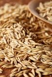 Pile of unpeeled oat grains on wooden background, top view, close-up, macro, shallow depth of field. Pile of unpeeled oat grains on wooden background, top view Royalty Free Stock Photos