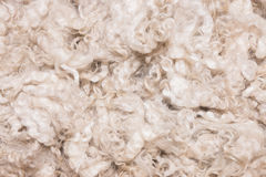 Pile of unprocessed high quality merino wool Royalty Free Stock Images