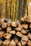 Pile Up Of Wood Royalty Free Stock Photography
