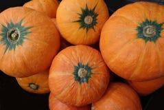 Pile of vibrant orange color ripe tropical pumpkins Stock Images