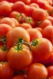 Pile of vined tomatoes Royalty Free Stock Images