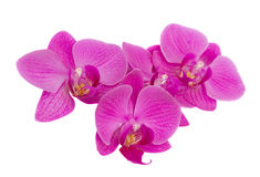 Pile of orchids Stock Images