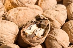 Pile of walnuts. A pile of walnuts with one open Royalty Free Stock Images