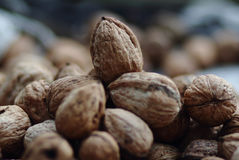 Pile of walnuts. Agriculture background. The walnut royalty free stock images