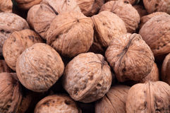 A pile of walnuts Royalty Free Stock Image