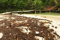 Pile of weeds and trash at Rincon beach, Samana peninsula Stock Photos