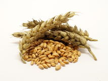 Pile of wheat grain with ears Stock Images