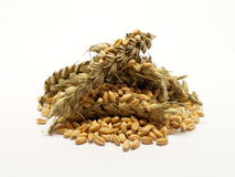 Pile of wheat grain with ears Stock Photos