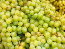 Pile of white wine grapes Royalty Free Stock Photo
