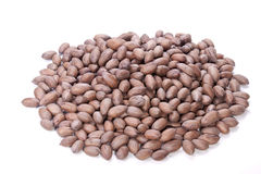 Pile of Whole Unshelled Brown Pecan Nuts Royalty Free Stock Photos