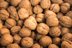 Pile of whole walnuts  with hard nutshells Stock Image