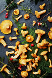 Pile of wild yellow mushrooms chanterelle cantharellus cibarius with forest plants on dark kitchen table overhead view. Stock Photography