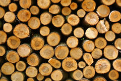 Pile of wood Royalty Free Stock Photo