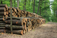 Pile of wood. A big pile of wood in a forest road Stock Images