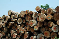 Pile of wood. A pile of nature wood stock images