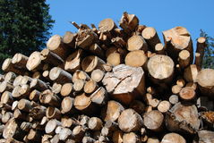 Pile of wood. Pile of pine wood in summer Royalty Free Stock Images
