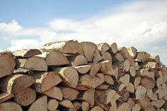 Pile of wood. In the countryside Stock Image
