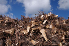 Pile of wood. Huge pile of wood left after clearing the forest royalty free stock images