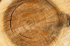 Pile wood Stock Photo