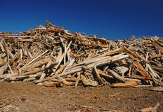 Pile of wood. Big pile of wood with bright blue sky on background Royalty Free Stock Image