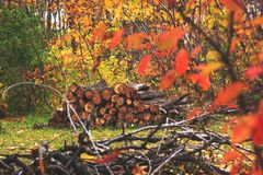 Pile of wood in autumn forest landscape. Heap of cut and stacked royalty free stock image
