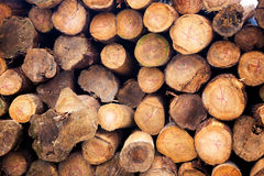 Pile of wood background Royalty Free Stock Photos
