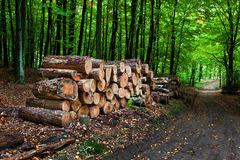Pile of wood Royalty Free Stock Image