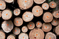 Pile of wood Stock Images