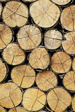 A pile of wood. Royalty Free Stock Photo